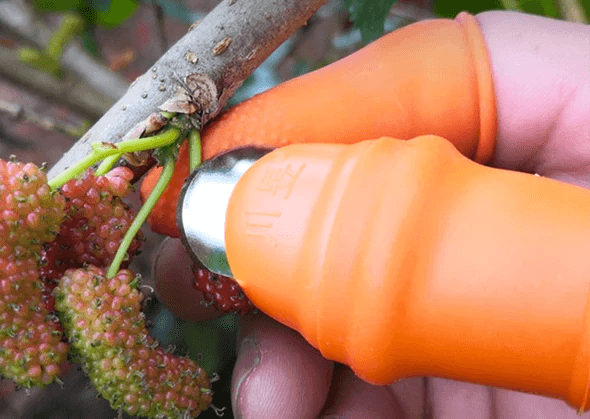 Fruit and Plants Thumb Picker