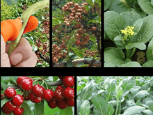 Load image into Gallery viewer, Fruit and Plants Thumb Picker