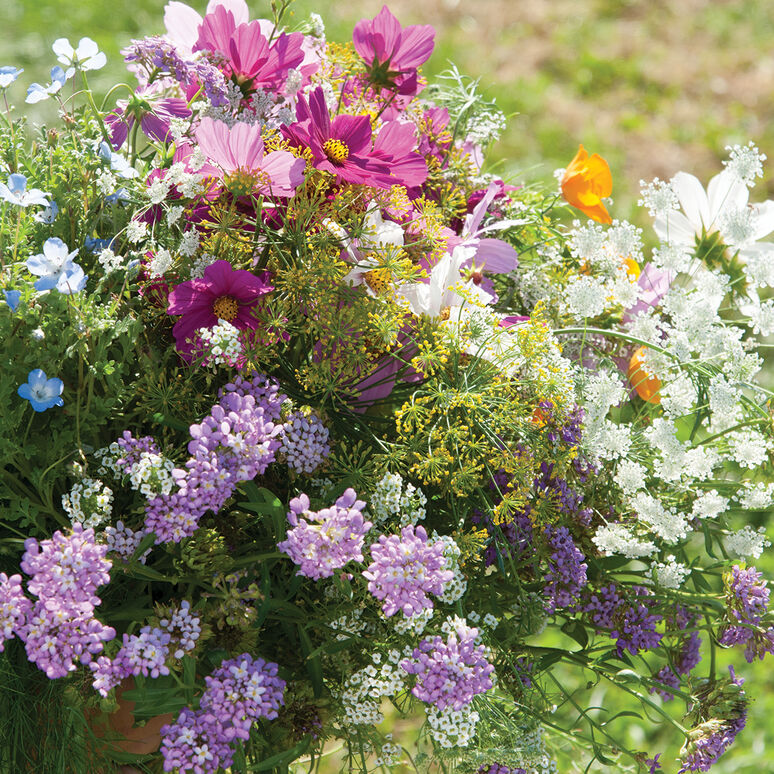 Beneficial Insect Gardener's Seed Mix
