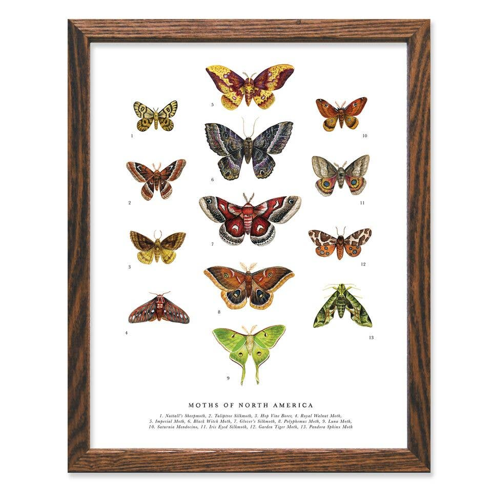 Moths of North America Wall Print