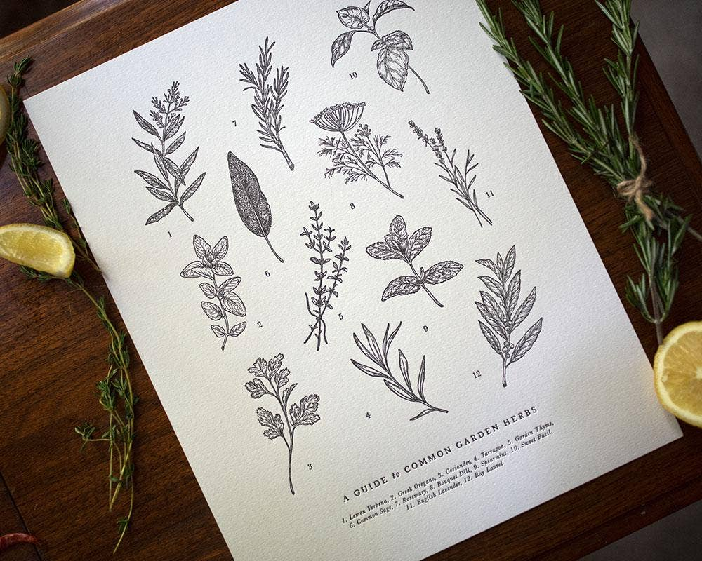 Guide to Garden Herbs Chart