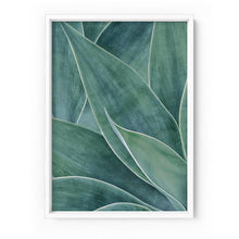 Load image into Gallery viewer, Agave Detail II - Art Print