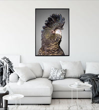 Load image into Gallery viewer, Black Cockatoo Framed Print
