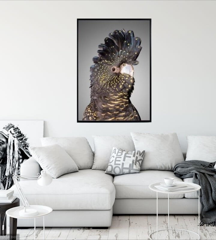 Black Cockatoo Framed Print