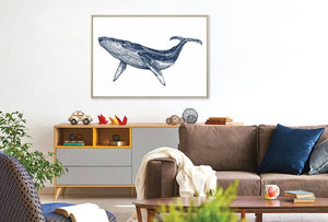 Boston Whale Canvas