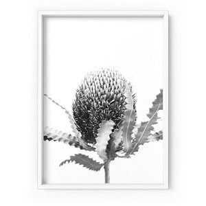 Banksia Flower Black and White - Art Print