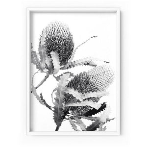 Banksia Flower Duo Black and White - Art Print