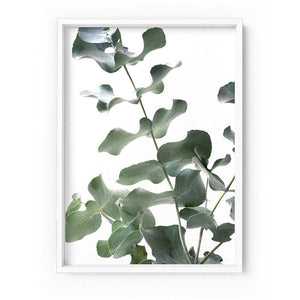 Eucalyptus Gum Leaves II - Art Print