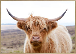 Henry Highland Cow