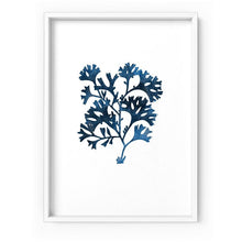 Load image into Gallery viewer, Hamptons Watercolour Blue Coral I - Art Print