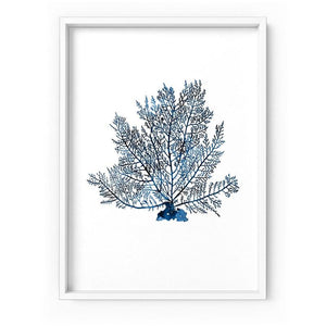 Hamptons Watercolour Blue Coral V - Art Print