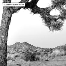 Load image into Gallery viewer, Joshua Tree Desert Landscape Black and White - Art Print