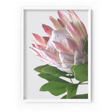 Load image into Gallery viewer, King Protea Soft Blush - Art Print