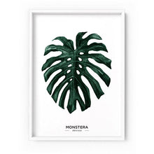 Load image into Gallery viewer, Monstera Leaf Watercolour - Art Print