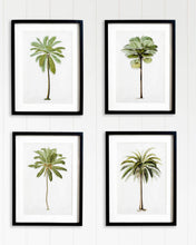 Load image into Gallery viewer, Palm Island Premium Print Set
