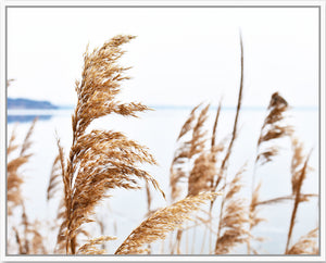 Soft Pampas Grass Framed Print