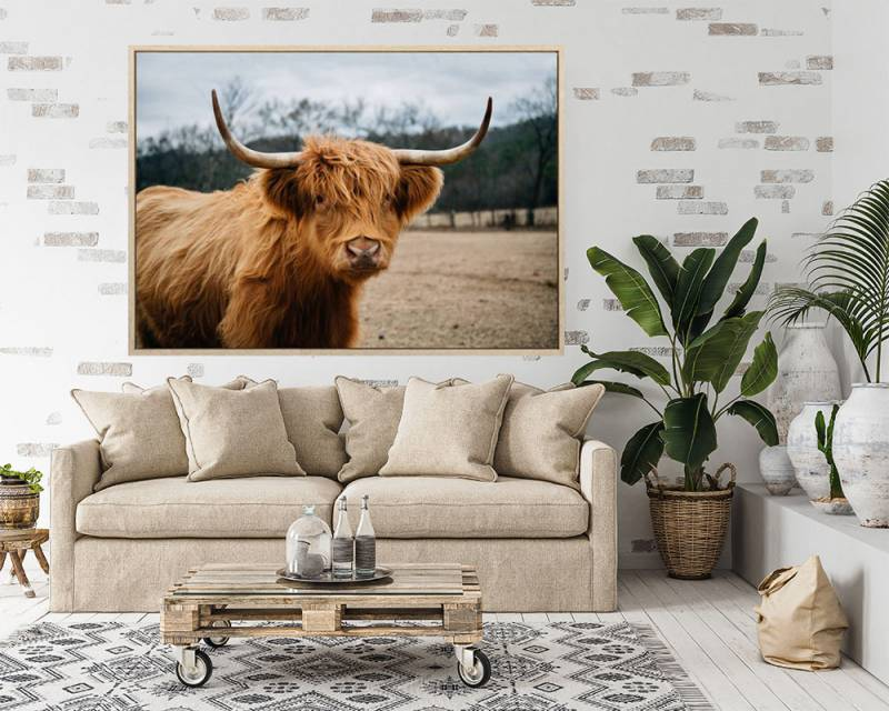 Samuel Highland Cow Canvas