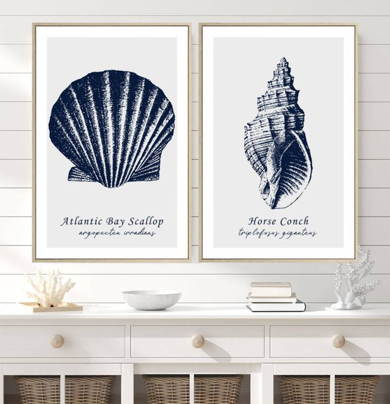 Shell Duo Framed Canvas Pair