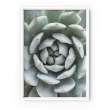 Load image into Gallery viewer, Succulent III - Art Print