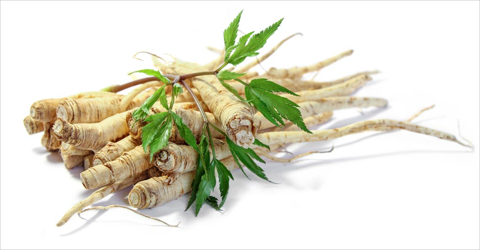 Health Benefits of Gingseng