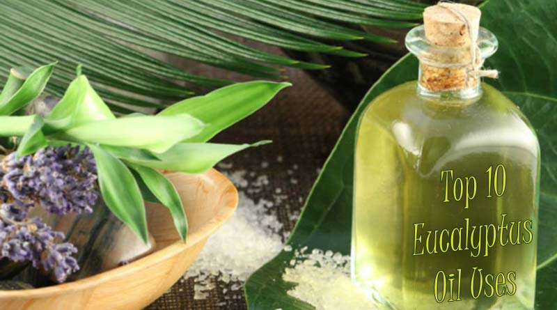 Eucalyptus Oil Benefits for Skin, Hair and Health