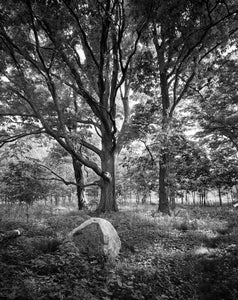 "Oak and Rock - 16""x20"" Hahnemühle Photo Rag Print"