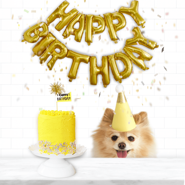 How to Plan your Dog's Birthday Party!