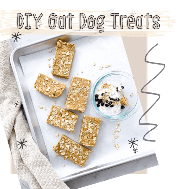 DIY Oat Dog Treat Recipes | Fruit & Yogurt Parfait and PB Rolled Oats Bars