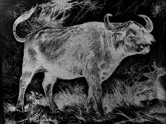 1895 sketch of African buffalo