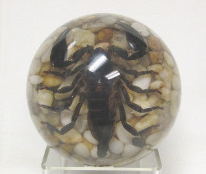 Scorpion Dome Paperweight