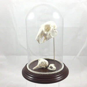 Animal skulls in dome