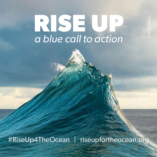 La Food Forest becomes official supporter of RISE UP for the ocean!