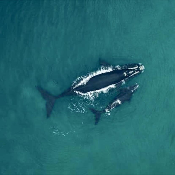 Sustainable whale watching in Plettenberg Bay