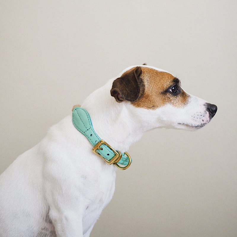 Dog collar country Pony turquoise