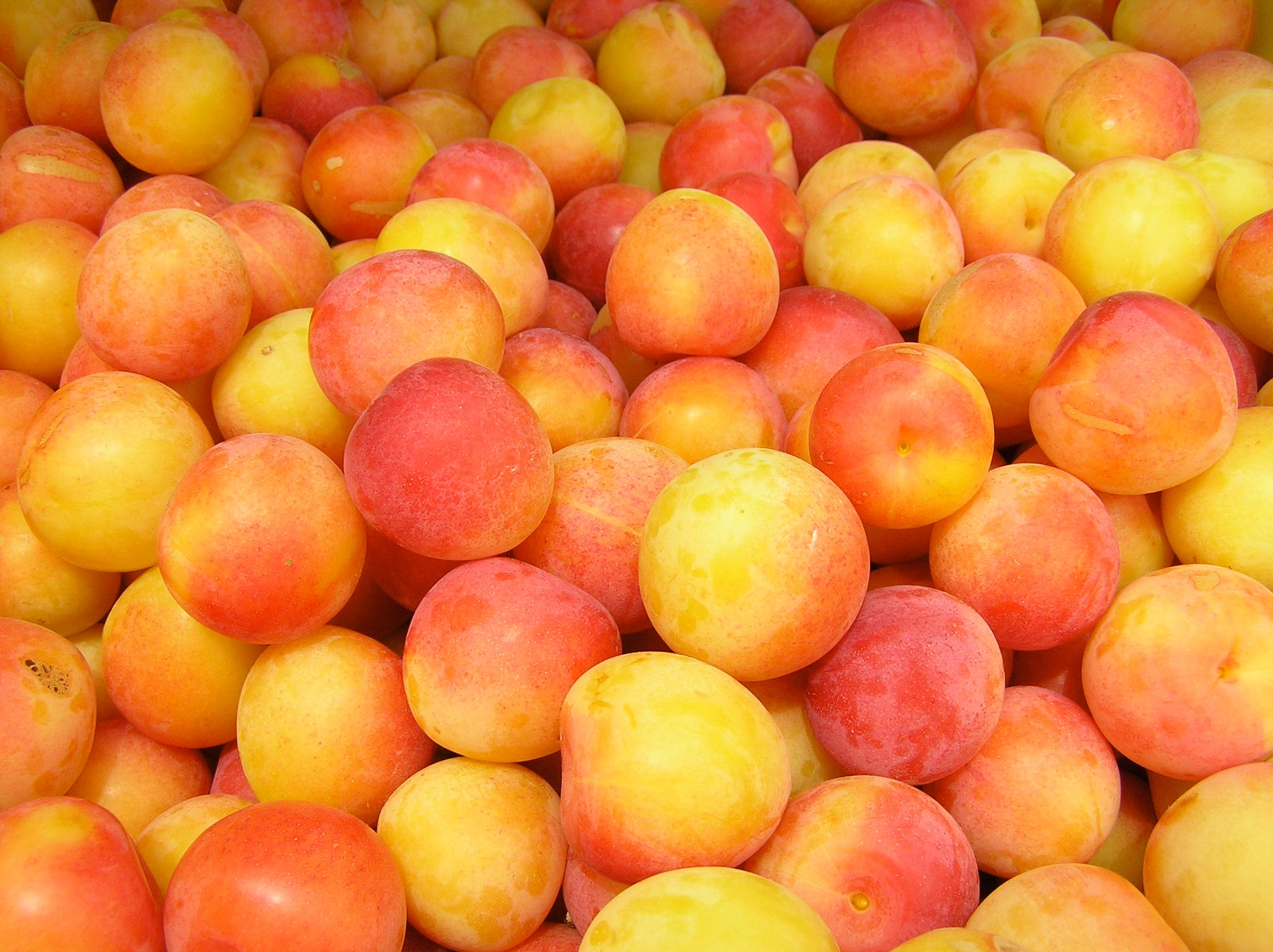 Early Golden Plums