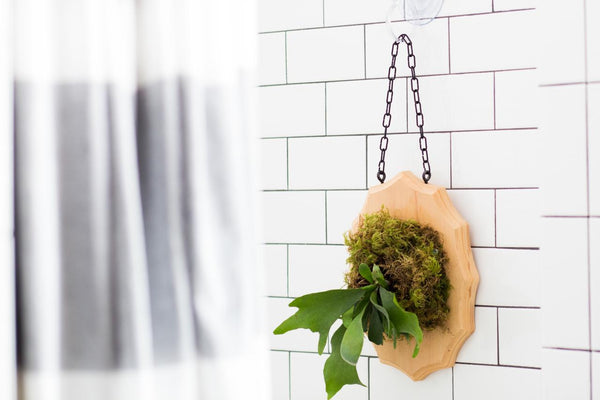 Small Space-Friendly DIY: How to Make a Staghorn Fern Wallhanging - Fundiz Shop