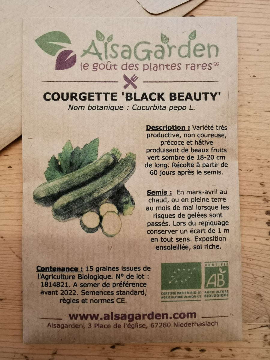 Courgette Black beauty