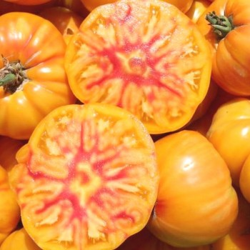 Tomate 'German Gold' bio