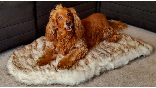 Orthopedic London Dog Bed