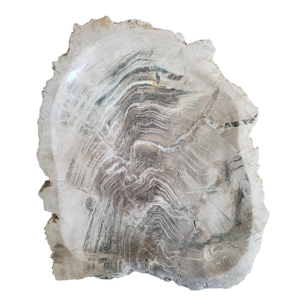 Natural Petrified Wood Catchall Bowl