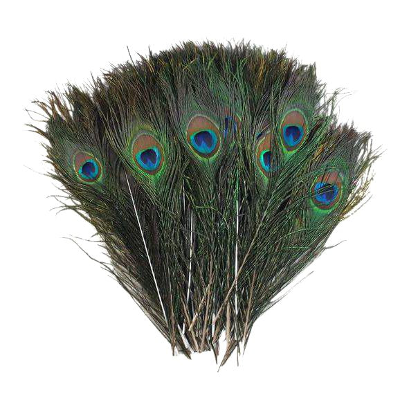 Peacock Feather Decor, 50 Piece