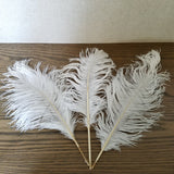 Naturally Shed Ostrich Feathers, 25 Piece