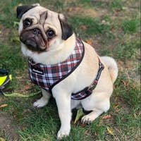 Tartan Pet Reversible Health Harness