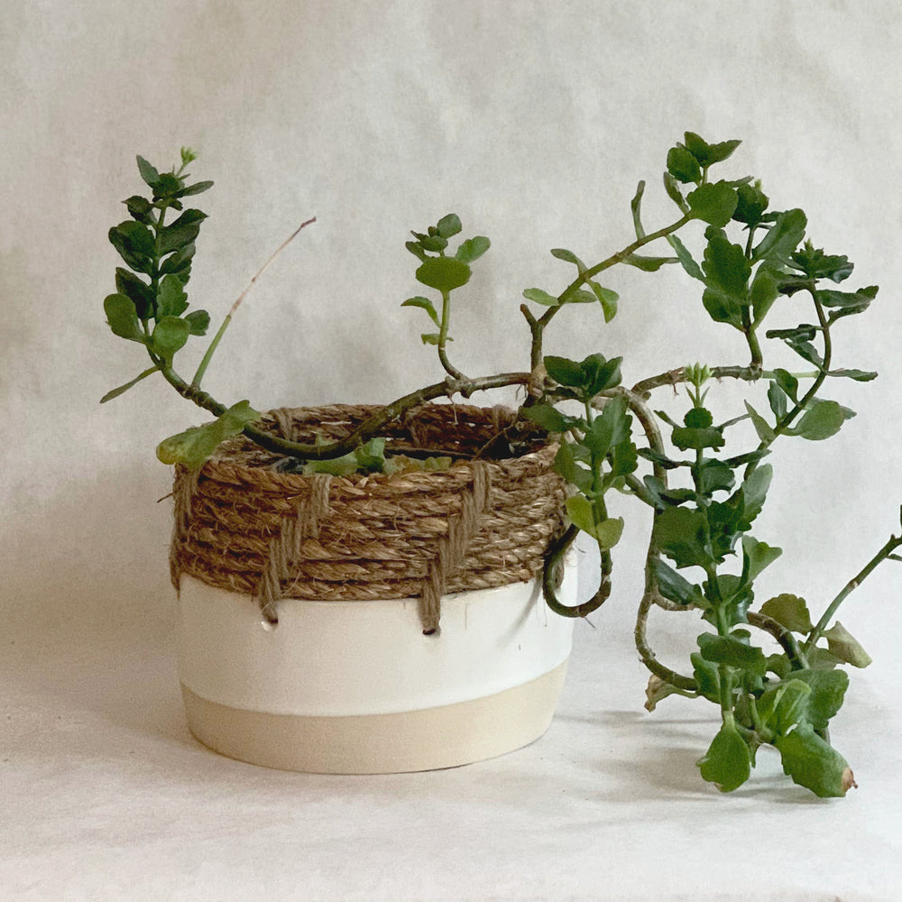 Load image into Gallery viewer, Woven Top Planter