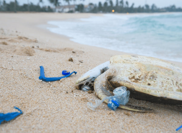 Plastic is the Enemy