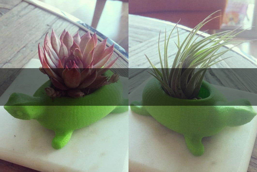 We teamed up with Adara Belisle to create these cute turtle pots for aerials and succulents