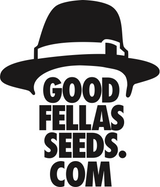 Goodfellas Seeds