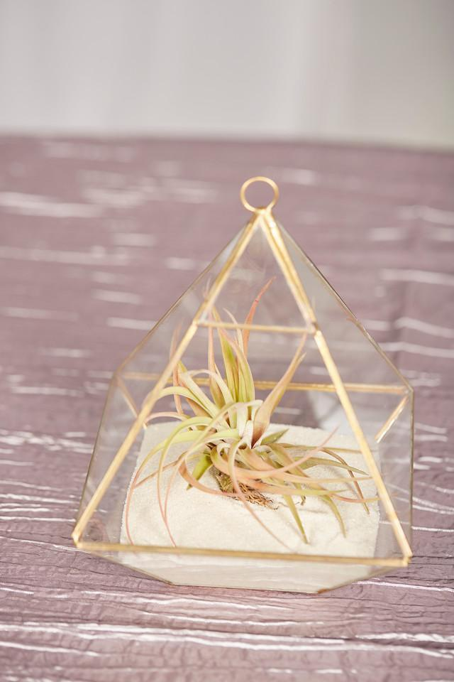 Terrarium Airplant