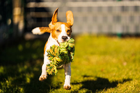Eco-Friendly Dog Toys for a Green Environment