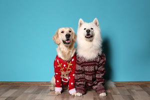 Other Dog Stuffz | Dog Coats & Sweaters